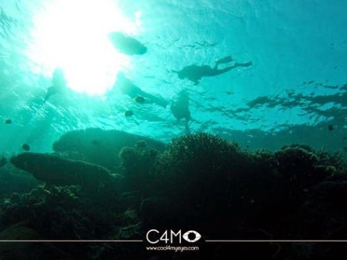 Bawah laut Kakaban Derawan