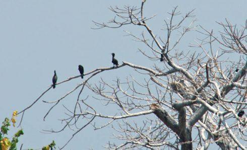 Surga bagi pencinta burung
